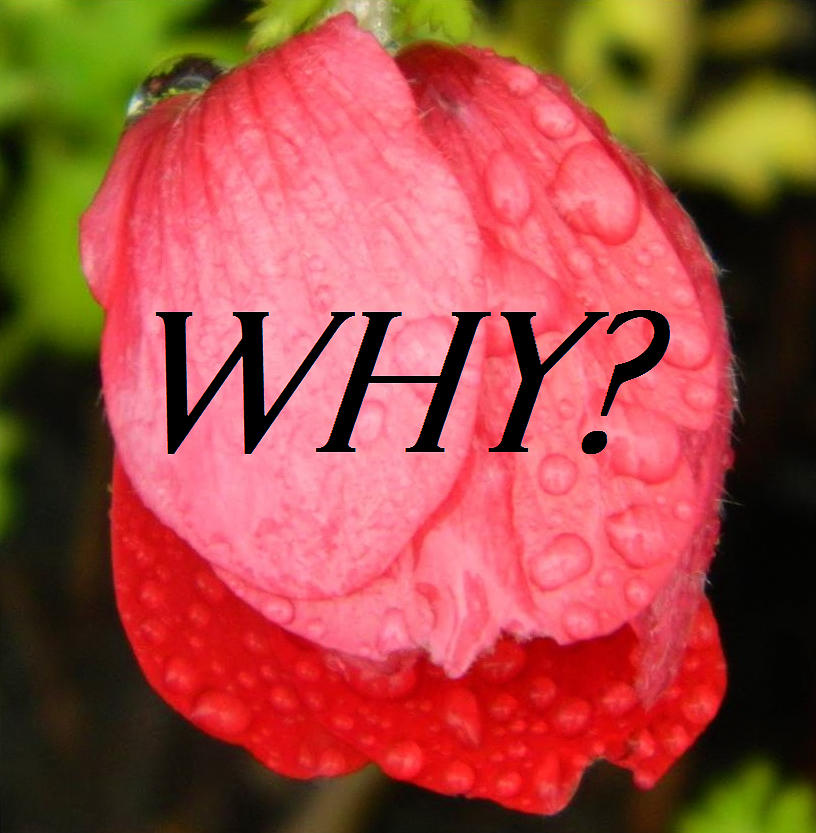 Why by Gallery Of Hope
