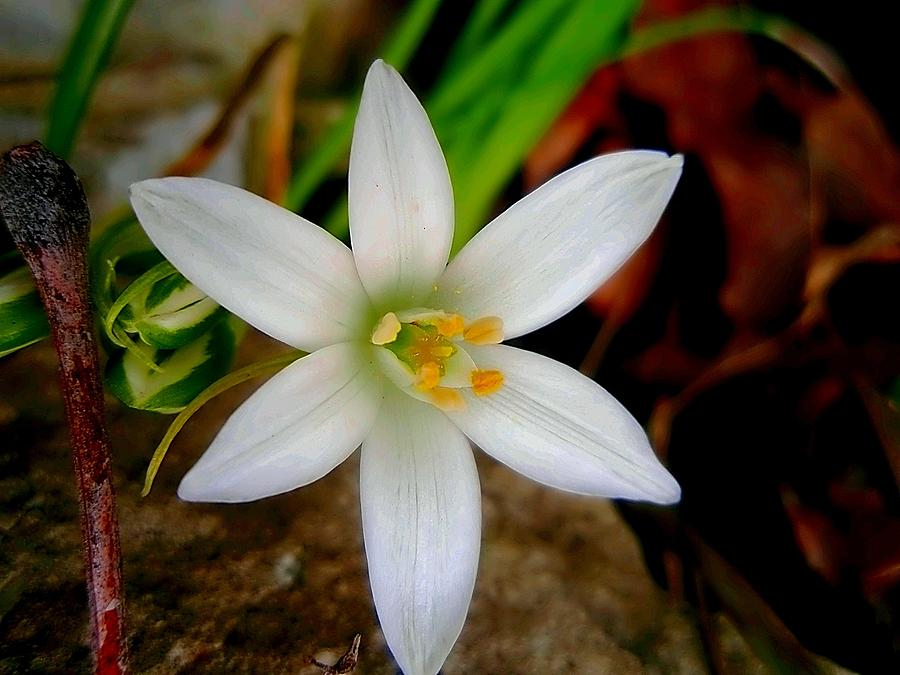 White Flower Photograph - Why Hello There  by Beth Akerman