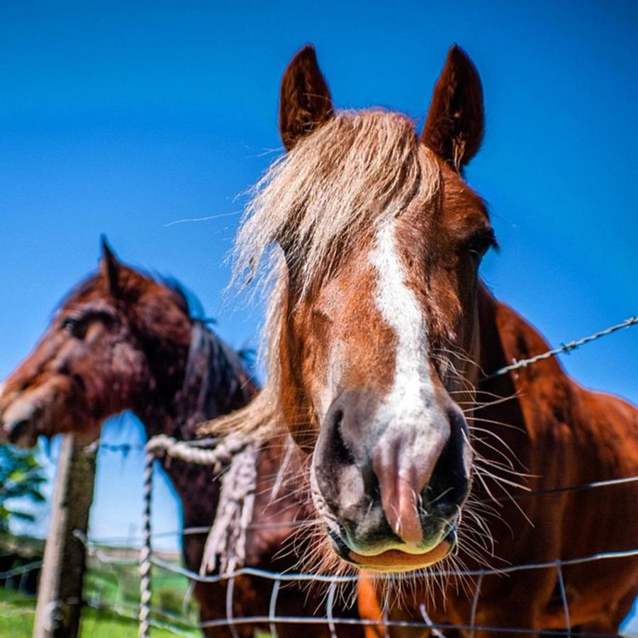 Horse Photograph - Why The Long Face? by Aleck Cartwright