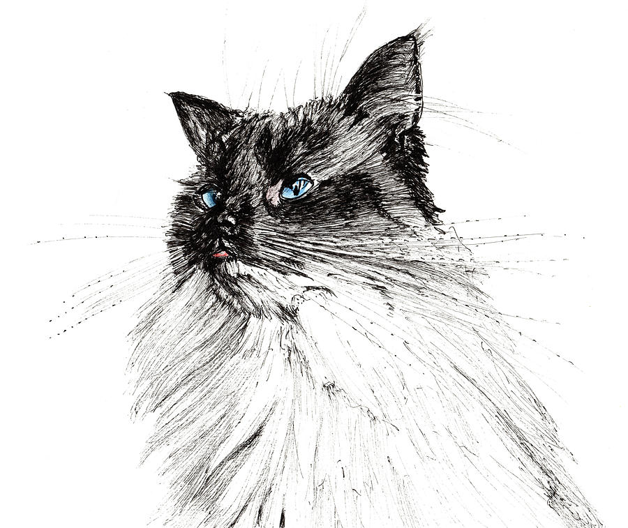 Cat Drawing - Why by Vincent Alexander Booth