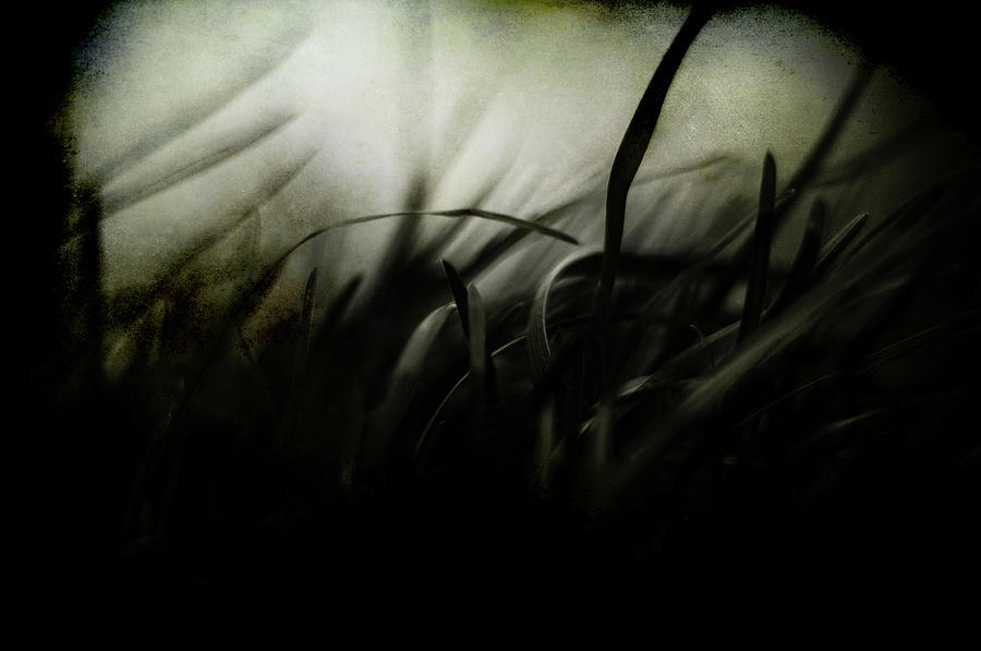 Dark Photograph - Wicked Garden by Rebecca Sherman
