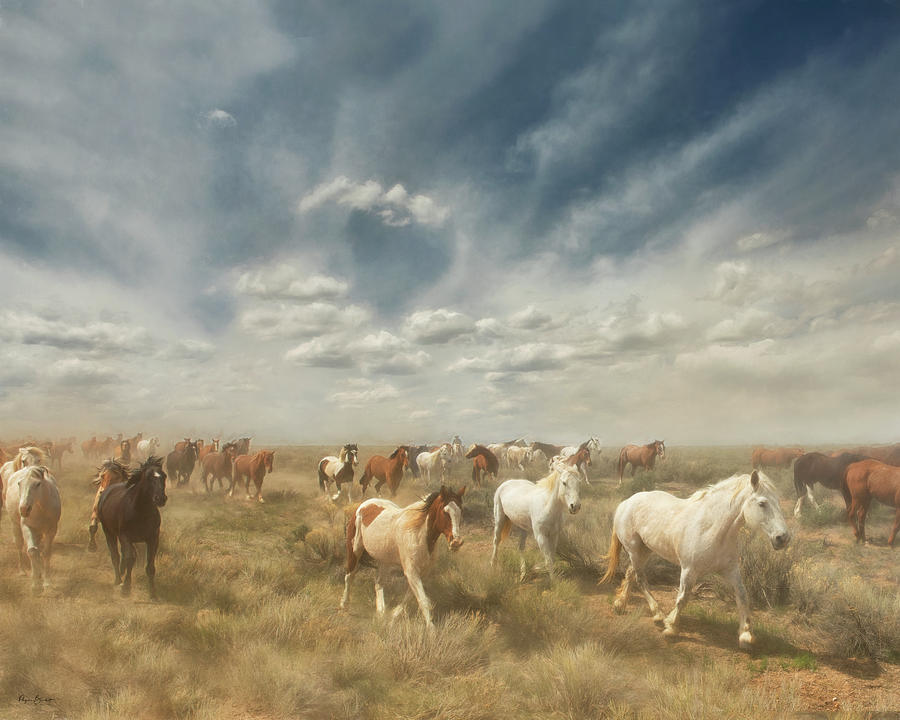 Wide Range by Phyllis Burchett