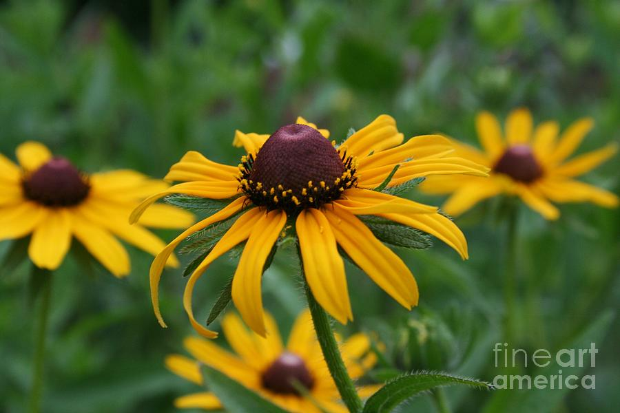 Daisy Photograph - Wild And Wow by Leslie  Sims