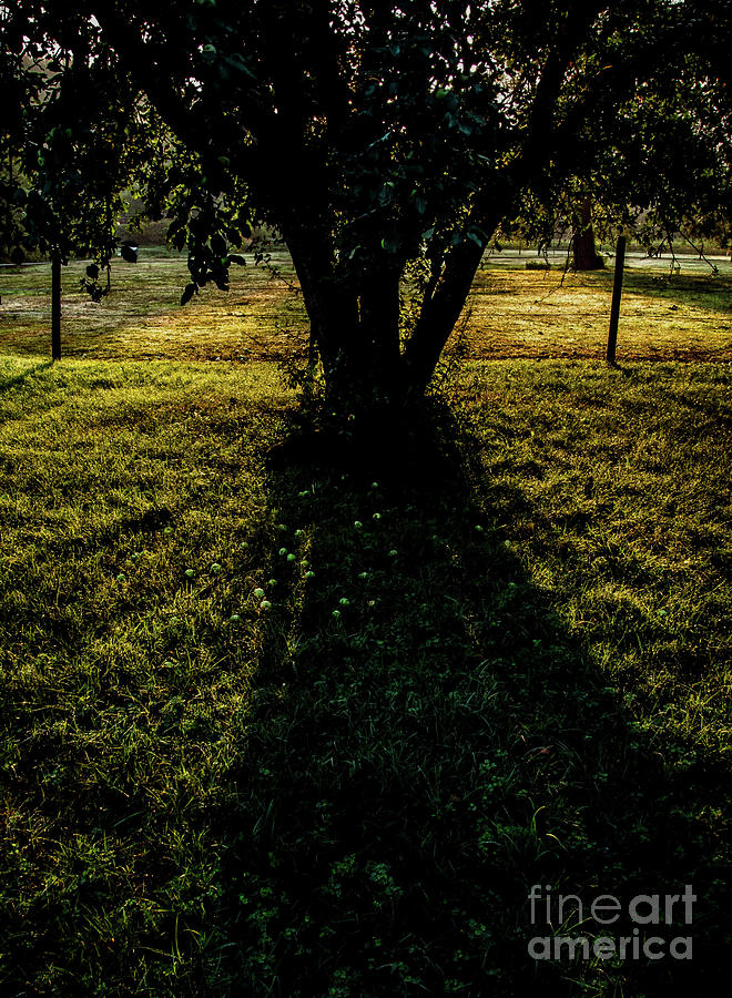 Apple Tree Photograph - Wild Apple Tree 1 by James Aiken
