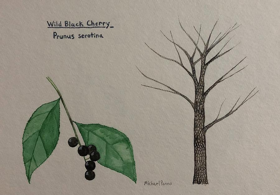 Nature Painting - Wild Black Cherry Tree Id by Michael Panno