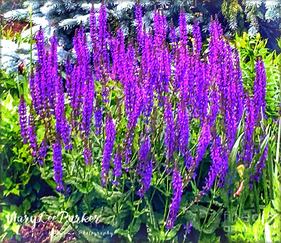 Wild Blue Lupine by MaryLee Parker