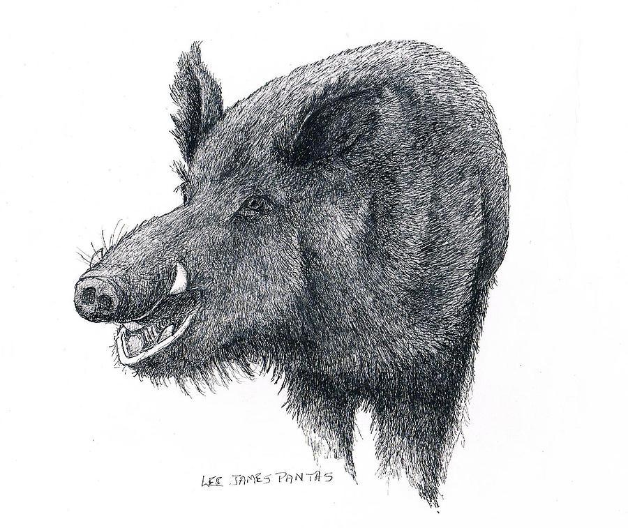 Boar Drawing - Wild Boar by Lee Pantas