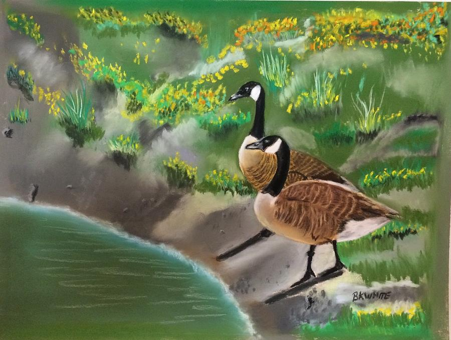 Wild Canadian Geese by Brian White