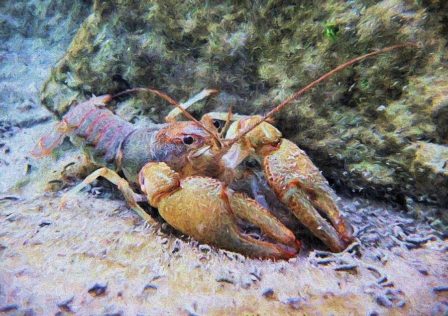 Crawfish Photograph - Wild Crawfish  by JC Findley