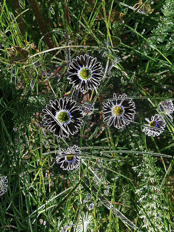 Wild Daisies Abstract Photograph