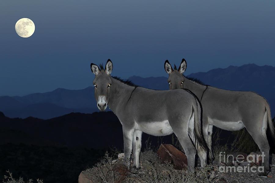Nature Photograph - Wild Donkeys by Rick Mann