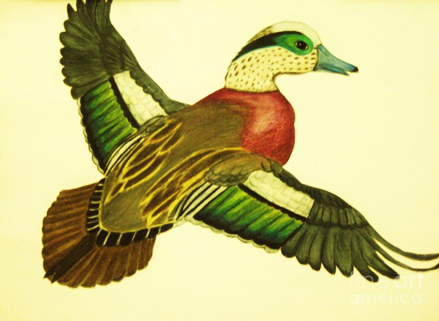 Flight Drawings Drawing - Wild Duck by Jamey Balester
