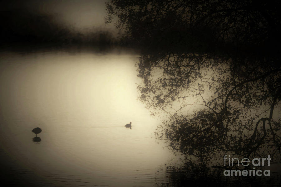 Photograph Photograph - Wild Duckpond by Ron Evans