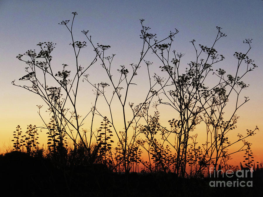 Wild Flora in silhouette by Mary Attard