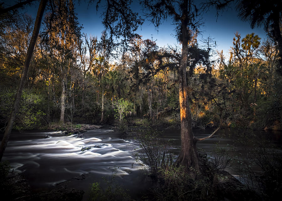 Wild Florida by Marvin Spates