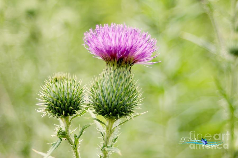 Wild Flower 2 Photograph