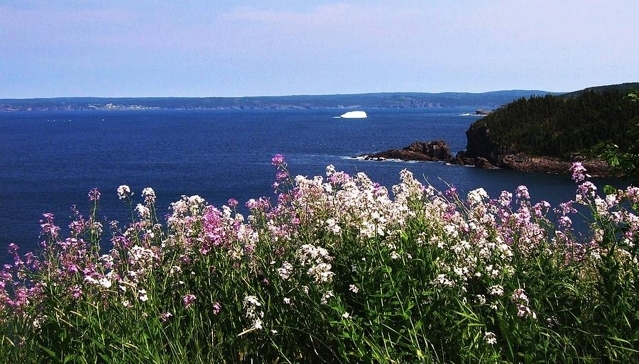 Wild Flowers And Iceberg Photograph by Seon-Jeong Kim