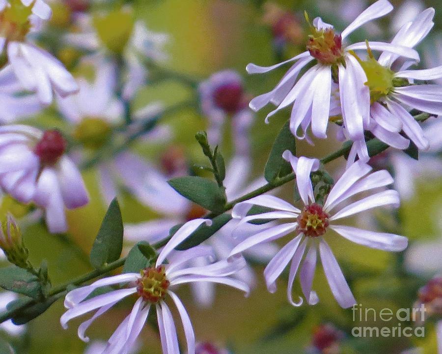 Wild Flowers Photograph