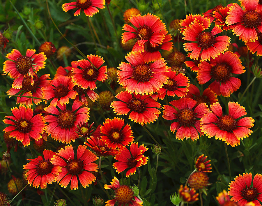 Summer Photograph - Wild Flowers In Field Color Art Print by Randy Steele