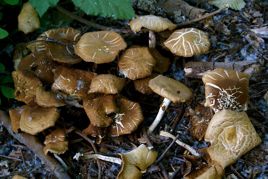 Botany Photograph - Wild Forest Mushroom Patch by Sonja Anderson
