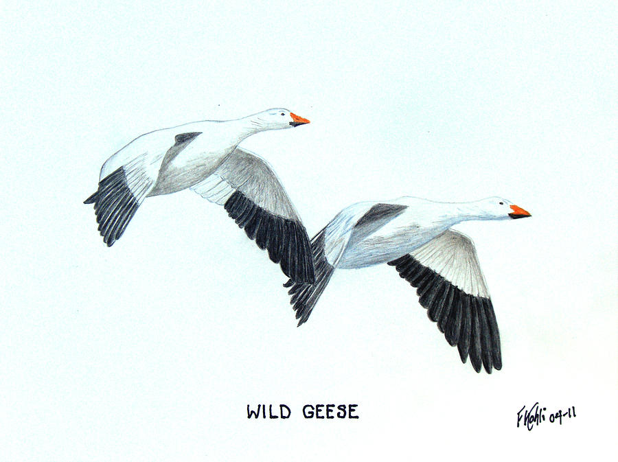 Nature Drawings Drawing - Wild Geese by Frederic Kohli
