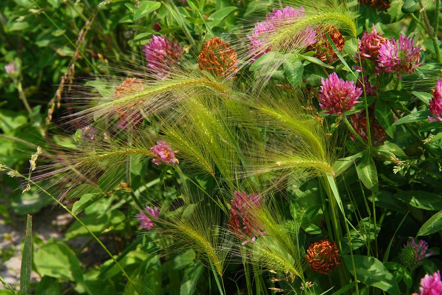 Grass Photograph - Wild Grasses And Red Clover by Kathryn Meyer
