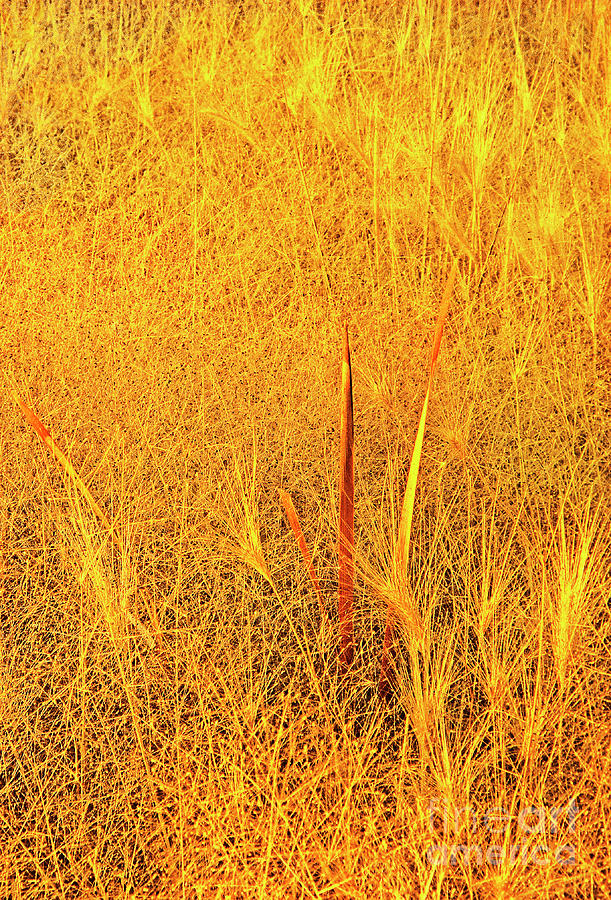 wild grasses autumn mono lake state park california by Dave Welling