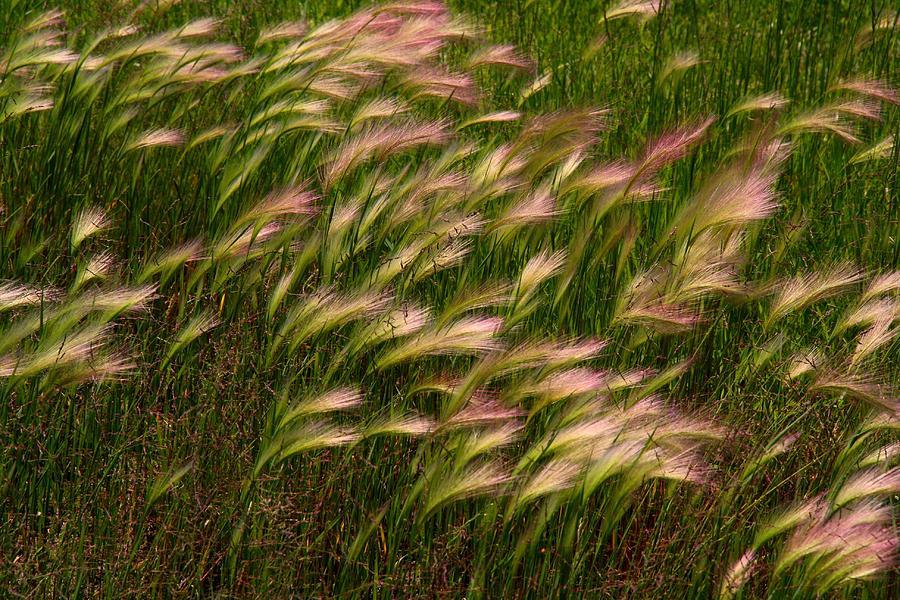 Grass Photograph - Wild Grasses by Kathryn Meyer