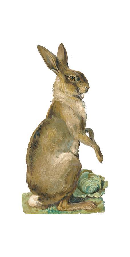 Rabbit Digital Art - Wild Hare by ReInVintaged