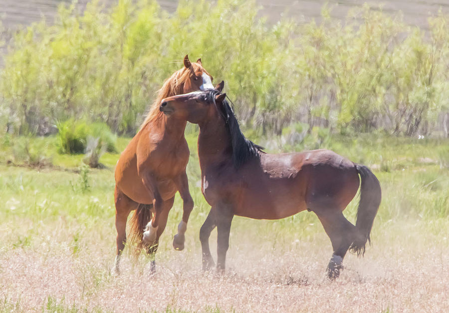 Wild Horse Action by Marc Crumpler