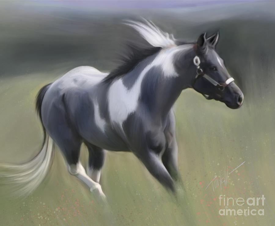 Wild Horses Blue Roan Stallion Mixed Media