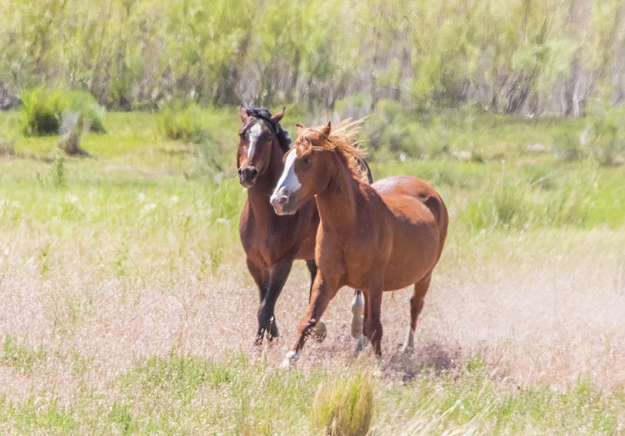 Wild Horse Chase by Marc Crumpler