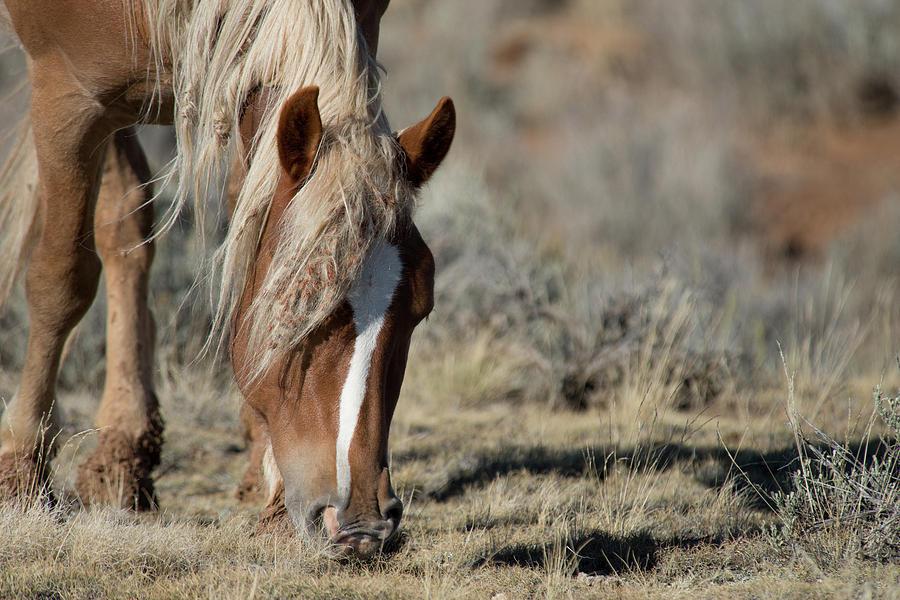 Cody Photograph - Wild Horse by Frank Madia