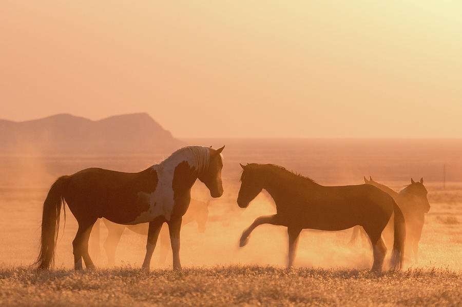 Wild Horse Glow by Wesley Aston