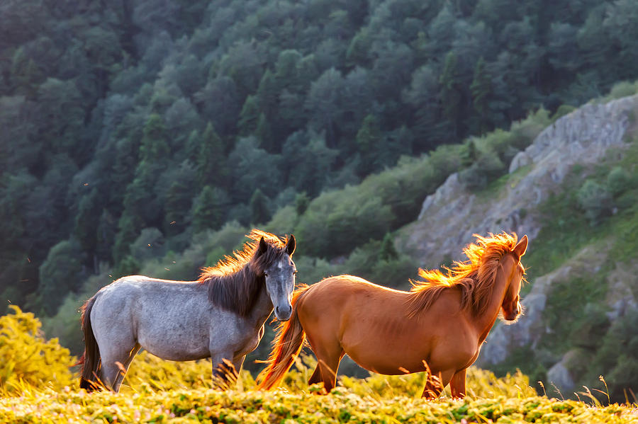 Balkan Mountains Photograph - Wild Horses by Evgeni Dinev