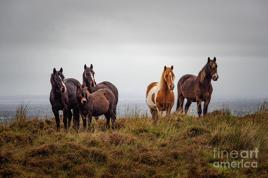 Wild Horses In Ireland Photograph