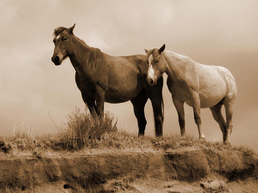 Horses Photograph - Wild Horses In Western Dakota by Cris Fulton