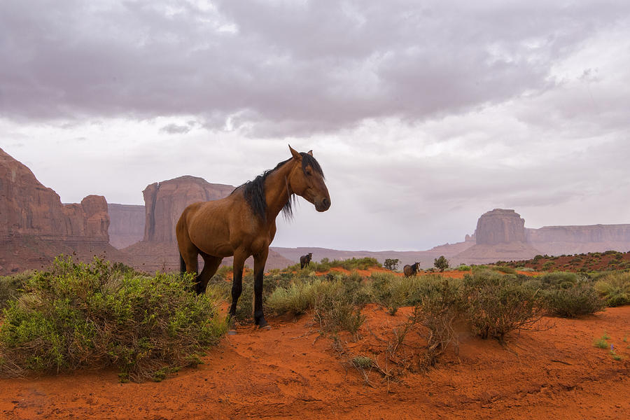 Wild Horses Of Monument Valley Photograph