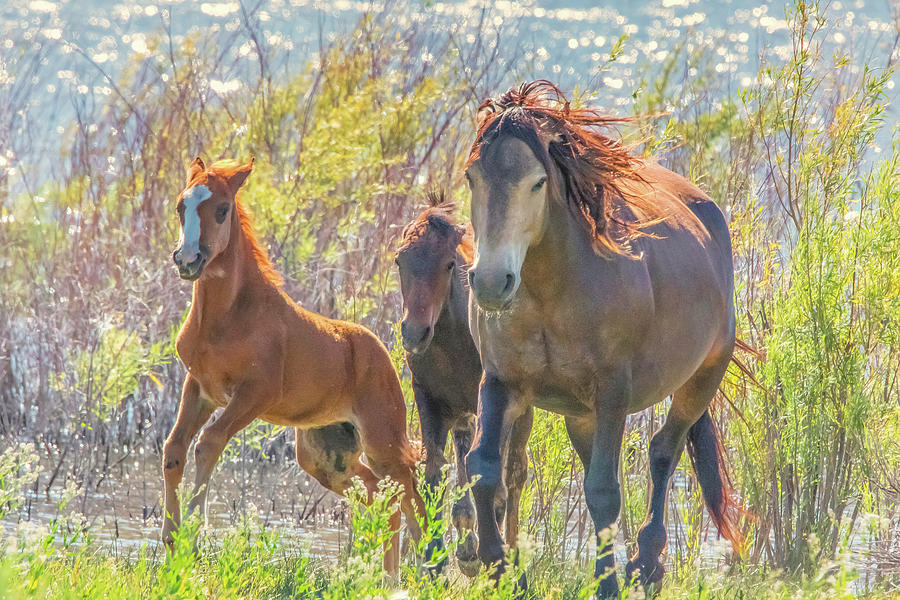 Wild Horses on the Move by Marc Crumpler
