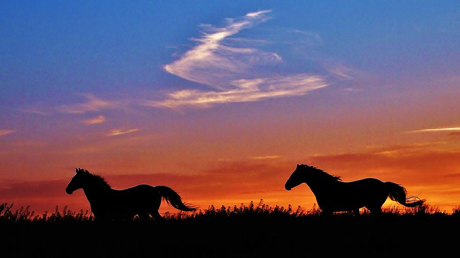 wild horses running in a kansas sunset photograph by greg rud