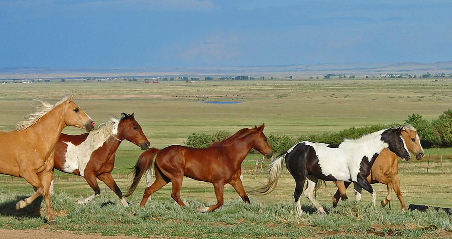 Herd Photograph - Wild Horses Wyoming by Heather Coen