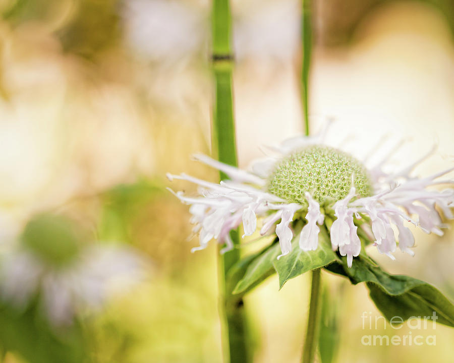 Flower Photograph - Wild in the Garden by Lisa McStamp