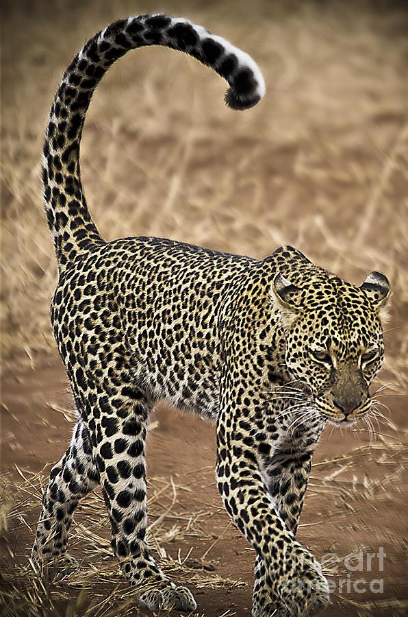 Wild Photograph - Wild Lady by Alessandro Giorgi Art Photography