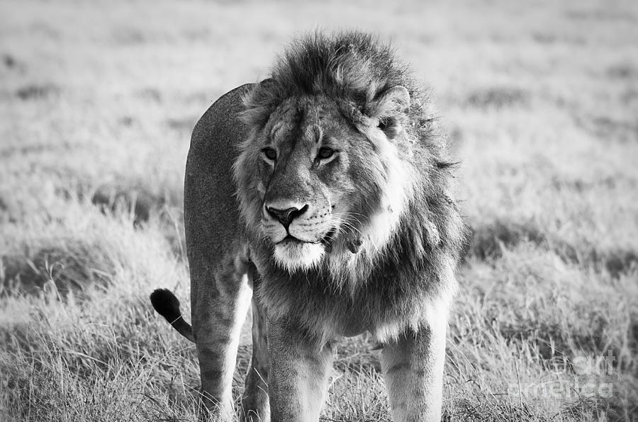 Wild Photograph - Wild Life by Alessandro Giorgi Art Photography