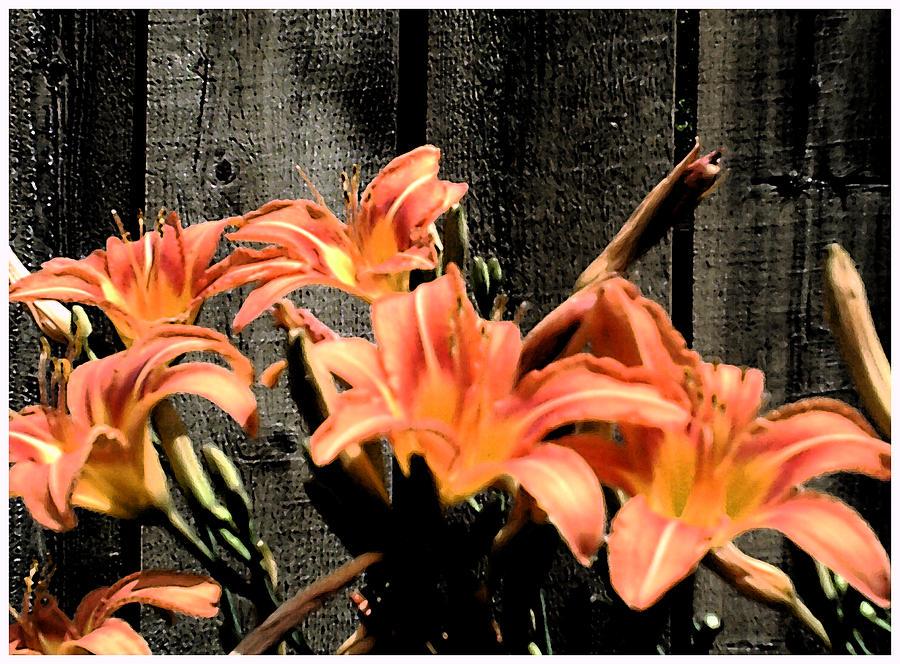 Wild Lilys Photograph by Richard N Watkins