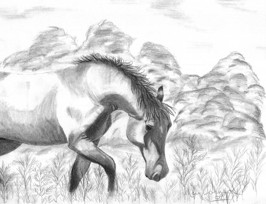 Horse Drawing - Wild by Mary Johnson