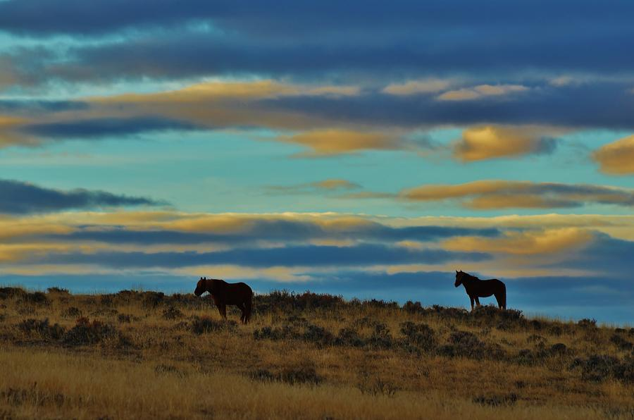 Wild Mustangs Photograph by George Bannister
