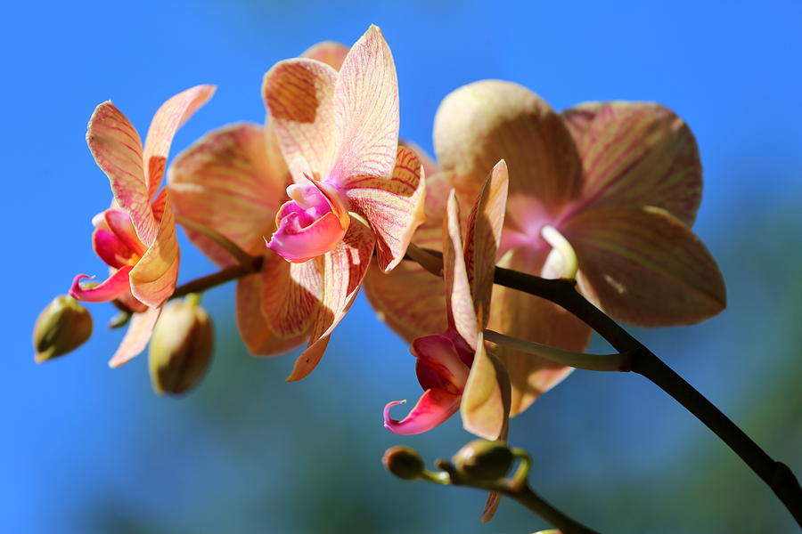 Orchid Photograph - Wild Orchid by Imagery-at- Work