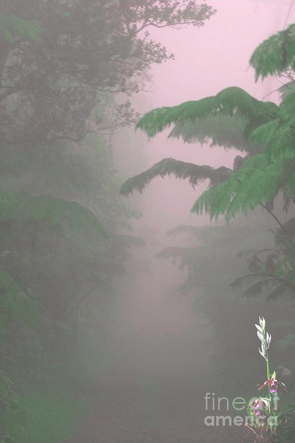 Kilauea Photograph - Wild Orchid in Volcano Mist by Uldra Patty Johnson