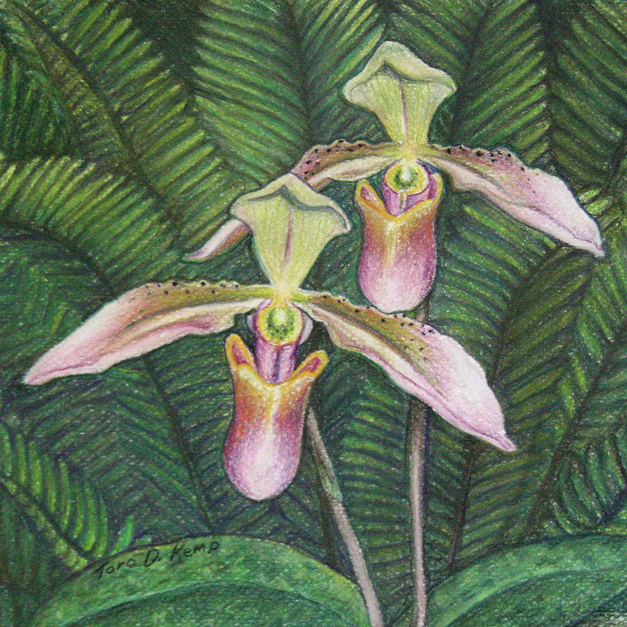 Orchid Pastel - Wild Orchid Twins by Tara D Kemp